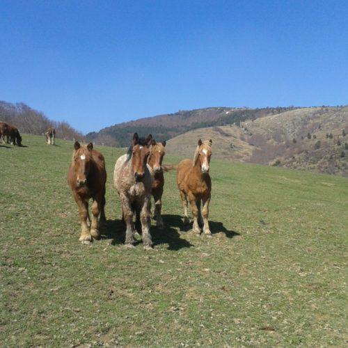 Menaut, Potro Ecológico, Filetes-Picadillo-Guisado-Chuleta-Lotes, Izalzu